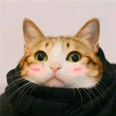 动物情侣头像猫狗搞怪可爱搞怪的猫狗情侣头像一对两张图片