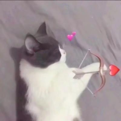 两只猫咪图片情侣头像高清超萌的可爱猫咪情侣头像两张两只