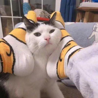 情侣头像猫咪一左一右超萌可爱的猫2个情侣头像一左一右图片