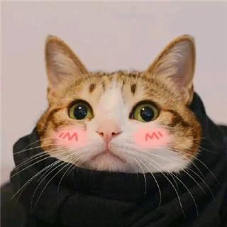 猫咪情头一左一右图片高清超萌的可爱猫咪情头一左一右