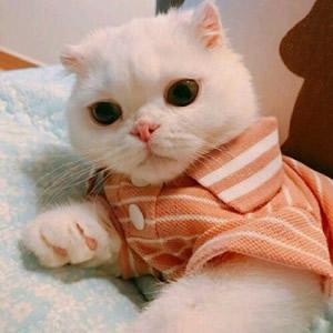 猫系情侣头像一左一右高清可爱的猫咪情侣头像不带人图片