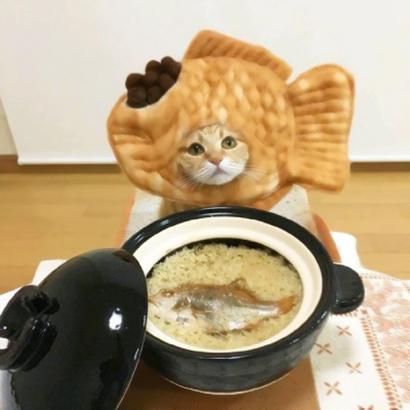 两个猫咪的情头高清可爱的情侣头像猫咪萌两张图片