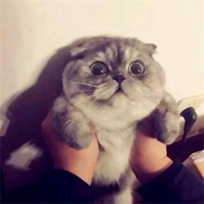 一猫一狗可爱情侣头像超萌超可爱的一猫一狗情侣头像高清图片