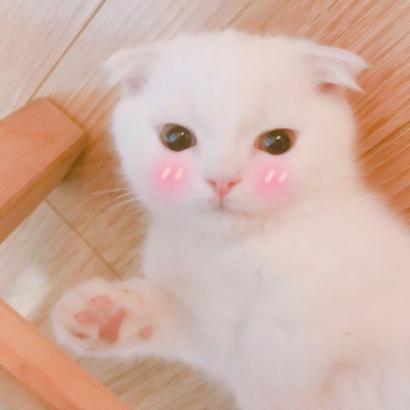 猫咪情头高清三组高清可爱的猫猫情头图片