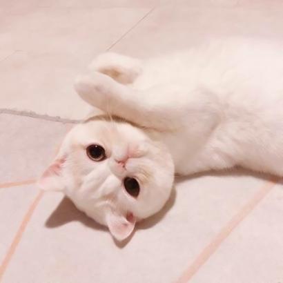 情侣头像猫咪一男一女高清可爱的小猫情侣头像超萌图片