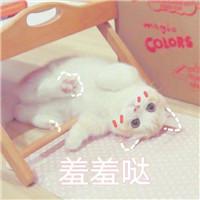 猫咪系列的情头超萌可爱的小猫情头一对两张图片