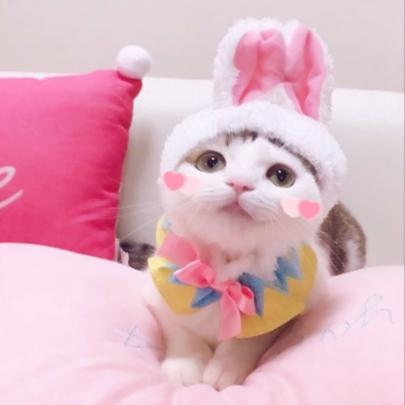 猫咪情侣头像高清图片搞怪超萌的情头可爱猫咪图片