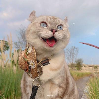 猫咪男女情头又胖又萌的猫咪高清情侣图片头像
