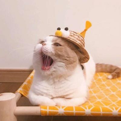 情侣猫咪头像一左一右高清超萌的情侣猫头像可爱图片