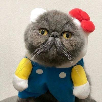 qq头像萌宠猫咪图片高清好看的qq情侣萌可爱猫咪头像图片
