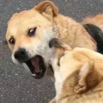 动物微信情头高清可爱沙雕的微信情侣头像动物一对两张图片