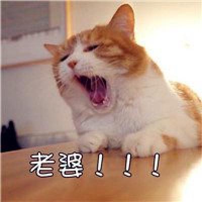 可爱老婆老公猫咪情侣头像图片