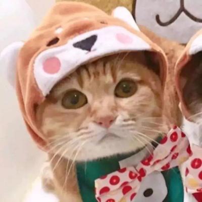 情侣头像动物可爱高清超萌的小猫小狗情侣头像可爱图片