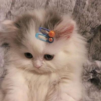 可爱猫咪情头一对两张高清可爱的萌猫情头一对两张图片精选