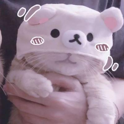 2020猫咪情侣头像高清超萌可爱的2020猫咪情头一对图片