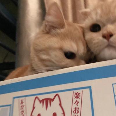 可爱猫咪情侣头像一张两对图片