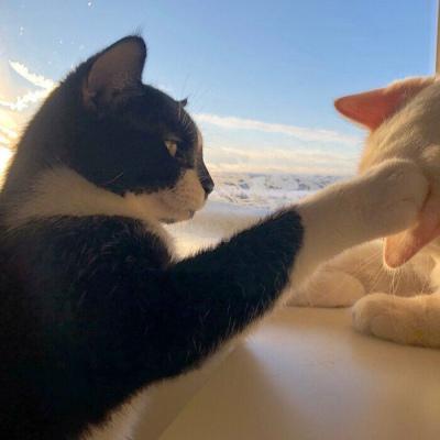 小猫情头一对高清,可爱的情头猫咪一对搞怪图片