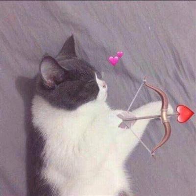 猫咪闺蜜头像一对两张高清好看的猫咪闺蜜头像可爱图片