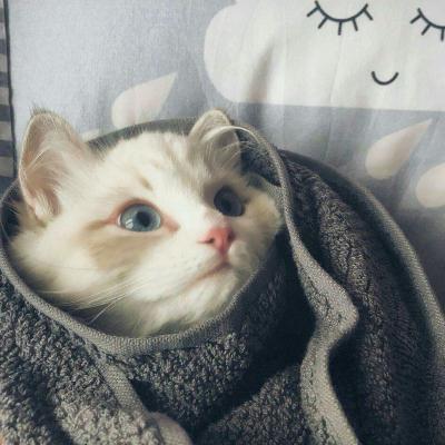 可爱猫咪闺蜜头像高清超萌的小猫闺蜜头像图片