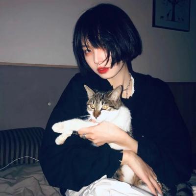 人抱猫头像女,高清好看的美女抱萌猫头像图片