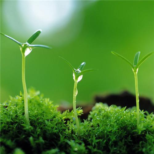 绿色唯美清新头像高清唯美的绿色清新图片头像