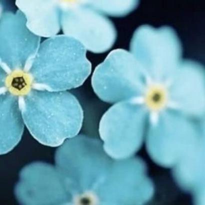 好看的花朵图片头像高清唯美的美丽花朵图片头像