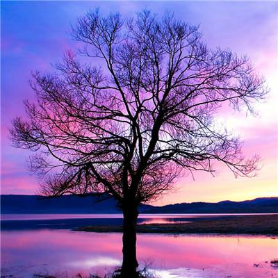 微信头像一棵树高清好看的一棵树图片头像大全