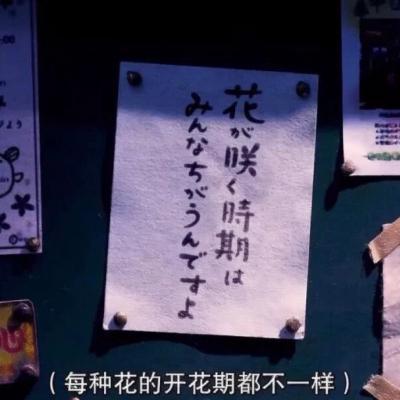 日系文字头像高清日系的静物风景图片头像带字