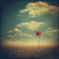 唯美意境头像风景创意图片