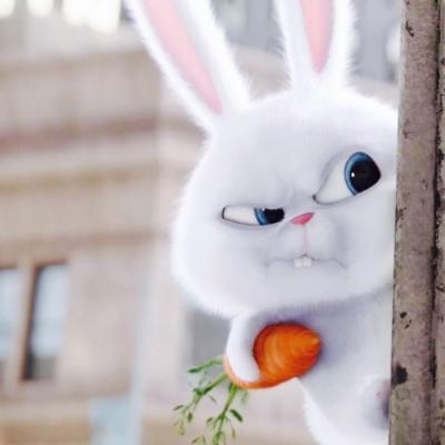 宠物大机密兔子图片头像高清可爱的爱宠机密兔子头像高清图片