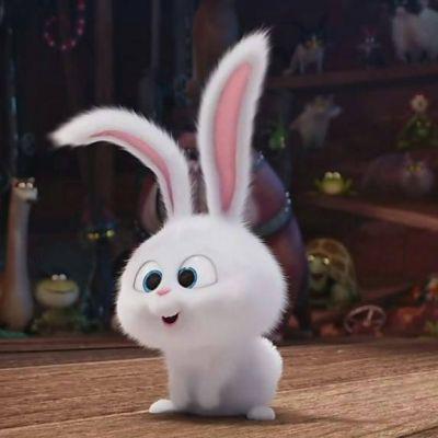 爱宠大机密兔子头像图片高清可爱的爱宠大机密兔子qq头像