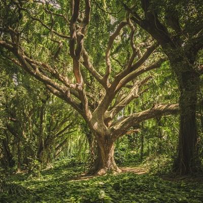 微信头像树林,感受美丽的树林风景高清图片