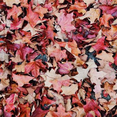 落叶唯美头像图片,地上的落叶也是美丽的风景线